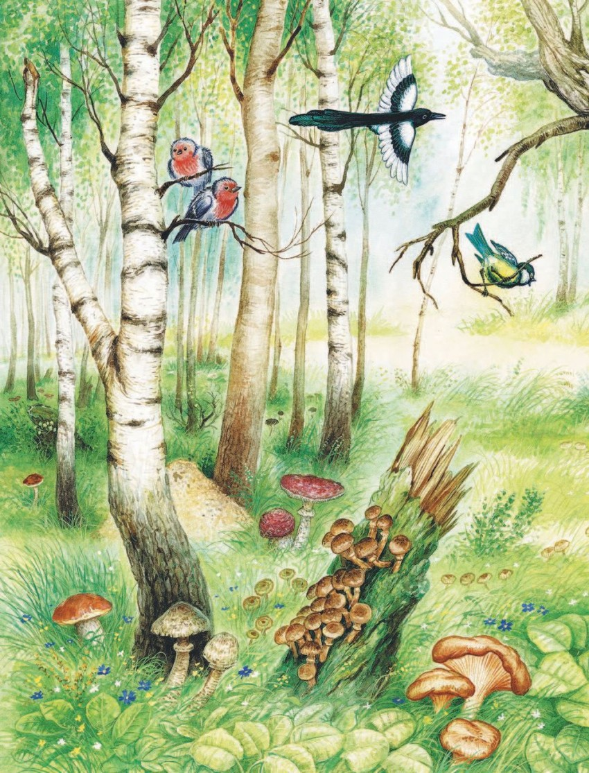 Лесные картинки главные герои